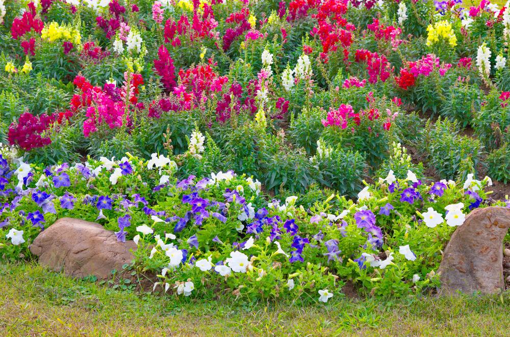 Alta Vista Gardens Vista Ca